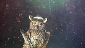 Figura poeira da coruja do ouro vídeos de arquivo