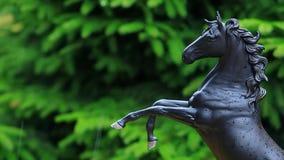 Figura preta gotas do cavalo da chuva da árvore de abeto filme