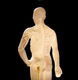 Figura utilizzata nell'agopuntura Fotografia Stock Libera da Diritti
