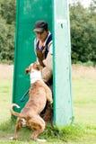 Figurant and American bulldog at work royalty free stock photos