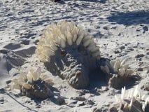 Figuras da areia e dos escudos na praia contra o mar imagens de stock