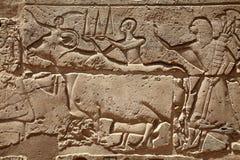 Figuras del alivio en templo egipcio Imagen de archivo libre de regalías