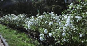 Figuras dos arbustos vídeos de arquivo