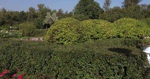 Figuras dos arbustos filme