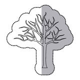 Figure bare oak tree icon. Illustraction design image Royalty Free Stock Photography