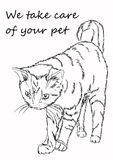 Figure cat. It can be used for advertising cattery, veterinary  Stock Photography