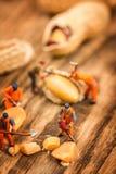 Figure che lavorano alle arachidi fotografie stock