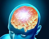 figure 3D médicale montrant le cerveau masculin Photographie stock