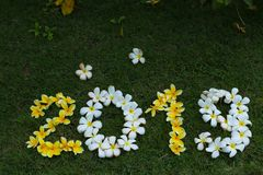Figure dei fiori gialli e bianchi su erba verde immagini stock
