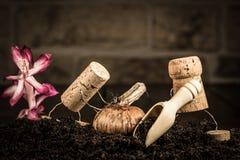 Figure del sughero del vino, agricoltura con l'agricoltore due Immagini Stock