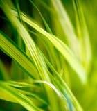 Figure dell'erba Fotografie Stock Libere da Diritti