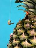 Figure dello scalatore di montagna sull'ananas Fotografie Stock Libere da Diritti