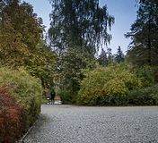 Park, in the distance a man on a cobbled alley. A figure disappearing in the distance in a cobbled park alley surrounded by trees and shrubs royalty free stock images