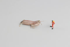 Figure of diver with Peacock mantis shrimp. The figure of diver with Peacock mantis shrimp stock images
