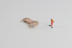 Figure of diver with Peacock mantis shrimp. The figure of diver with Peacock mantis shrimp royalty free stock image