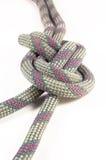 Figure eight knot isolation on white background Stock Image