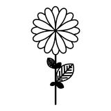 Figure flower with petals and leaf icon. Illustraction design Royalty Free Stock Photos
