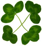 LuckClover Royalty Free Stock Photo