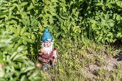 The figure of a garden gnome in the green grass. Copy space. Selective focus royalty free stock photo