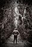 Figure garniture loin dans le chemin forestier dense Image stock