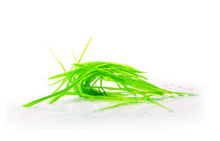 Figure green grass isolated Royalty Free Stock Photography