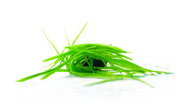 Figure green grass isolated Royalty Free Stock Images