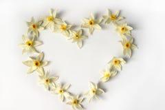 Figure heart of daffodils Stock Photography