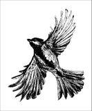 Figure le vol d'oiseau de mésange avec les ailes répandues, illustration tirée par la main illustration stock