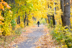Figure of a man leaving by the autumn alley Stock Photography
