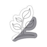 Figure plants with leaves icon image Stock Photography