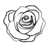 Figure rose with its petal icon. Illustraction design Royalty Free Stock Images