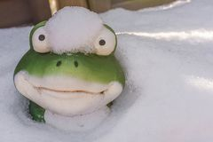 Funny shot of a frog looking out of the snow stock photo