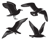 Seagull. The figure shows a bird seagull royalty free illustration