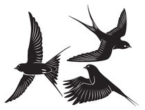 Bird swallow Royalty Free Stock Photography
