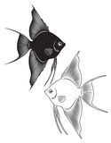 Angelfish. The figure shows a toy fish angelfish Stock Photo
