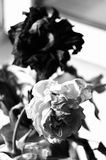 Angel and demon. The figure shows two roses, black and white. The idea is that both roses are beautiful in themselves, despite the fact that they are different Stock Images