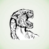 Figure tiger panther wildcat aggressive pattern. Figure tiger panther head aggressive wildcat drawing tattoo Royalty Free Stock Images