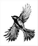 Figure tit bird flying with spread wings, hand drawn  illustration. Figure tit bird flying with spread wings, a sketch hand drawn  illustration Stock Photos