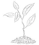 Figure twigs sprout. Sprout sprig in the ground. Vector illustration Stock Image