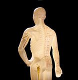 Figure used in acupuncture royalty free stock photo