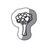Figure vegetable broccoli icon. Illustraction design image Royalty Free Stock Image