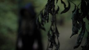 Figure of wicked witch is wearing in black long gown with hood, standing in scary dark forest