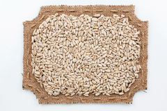 Figured frame of burlap with sunflower  seeds Royalty Free Stock Photo