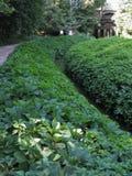 Figurerade gröna buskar på blomsterrabatten De planteras med en spiral Fotografering för Bildbyråer