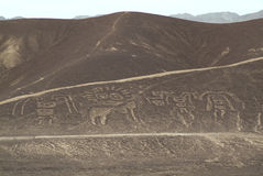 Figures of Palpa. Nazca (Peru Royalty Free Stock Photography