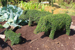 Figures piglets from plants. In landscape design Royalty Free Stock Photography