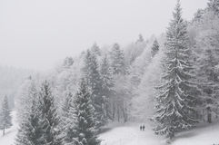 Figures walking in winter forest Royalty Free Stock Photo