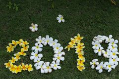 Figures of yellow and white flowers on green grass stock photography