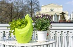 Figurilla de cerámica verde de un gallo en el fondo de plantas foto de archivo libre de regalías