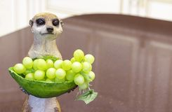 Figurina ceramica di un meerkat con un vaso dell'uva fotografia stock